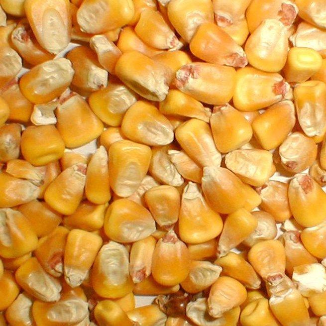 На фото кукуруза