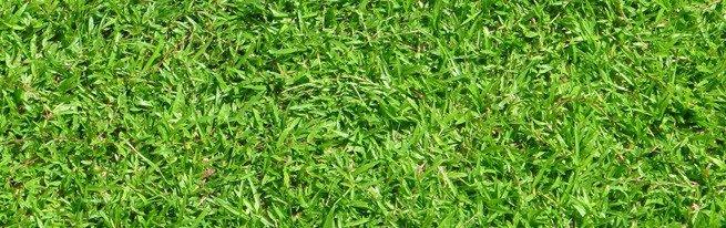 Гербициды для борьбы с сорняками и удобрения для подкормки газонной травы