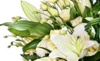 В какие сроки садить лилии осенью и можно ли сажать лилии с ростками