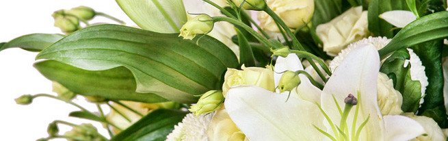 Как правильно посадить лилии осенью пошагово