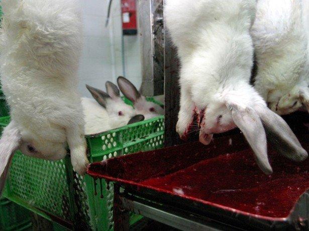 Забой для кроликов своими руками
