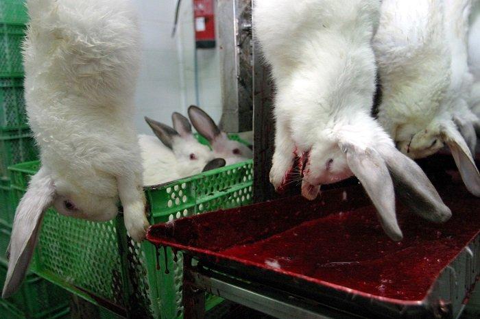 Как правильно сделать кроличью лапку