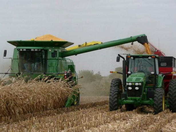 На фото уборка кукурузы на силос