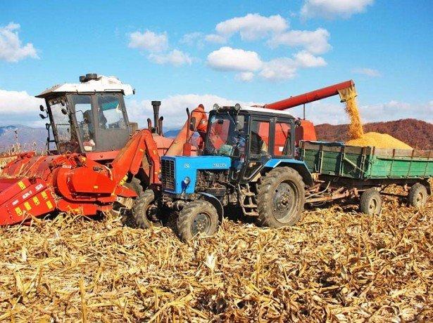 Фото уборки кукурузы на зерно