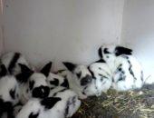 На фото кролики