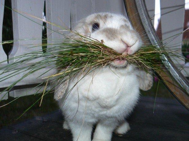 Чем кормить кроликов зимой в домашних условиях если нет сена
