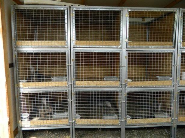 Фото клетки для кроликов своими руками пошаговая