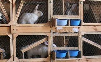 Клетки для кроликов своими руками – простые и усовершенствованные конструкции