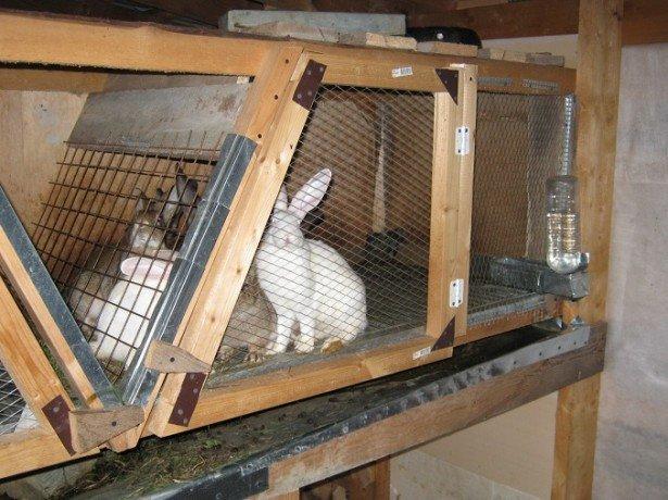 На фото клетки для кроликов