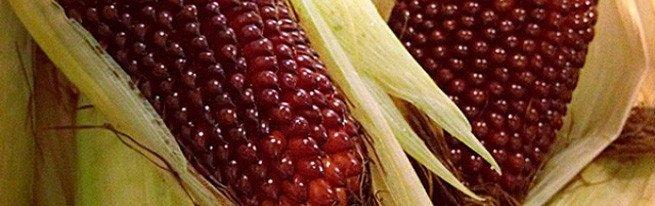 кукурузы на своем участке