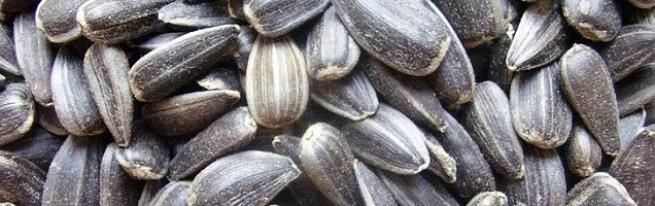 Полезны ли семечки подсолнуха или от них больше вреда организму?