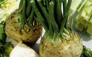 Популярные сорта корневого сельдерея, какие лучше выбрать для выращивания на участке?