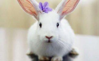 Варианты разведения кроликов в домашних условиях, на даче и в промышленных масштабах