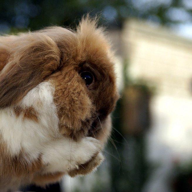 На фото кролик