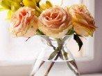 Как сохранить срезанные розы, чтобы они простояли в вазе максимально долго?
