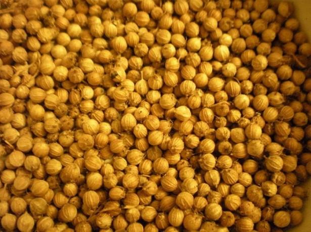 На фото семена сельдерея