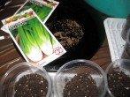 Секреты выращивания корневого сельдерея