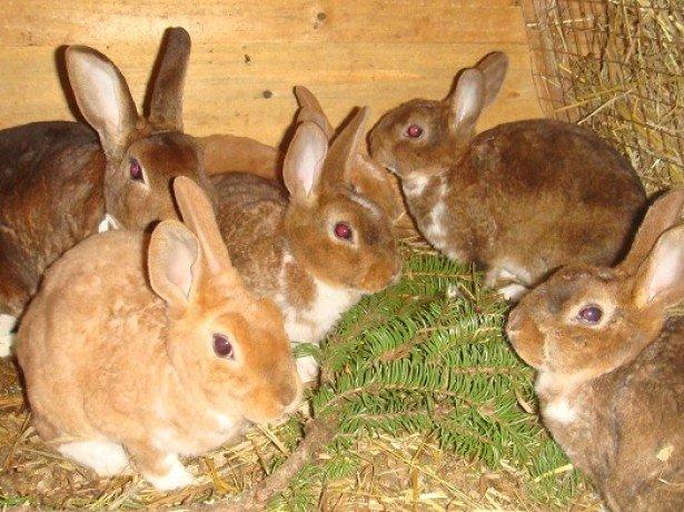 Фото кормления кроликов
