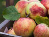 Фото яблок