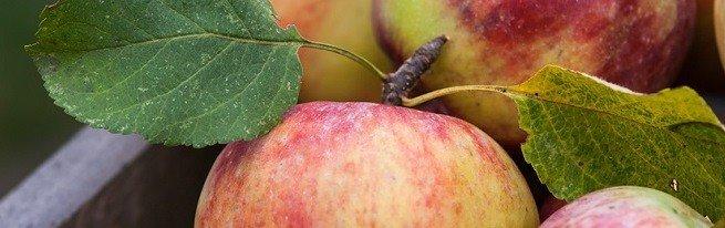 Чем полезно яблоко, что в нем содержится, и могут ли яблоки нанести вред здоровью?