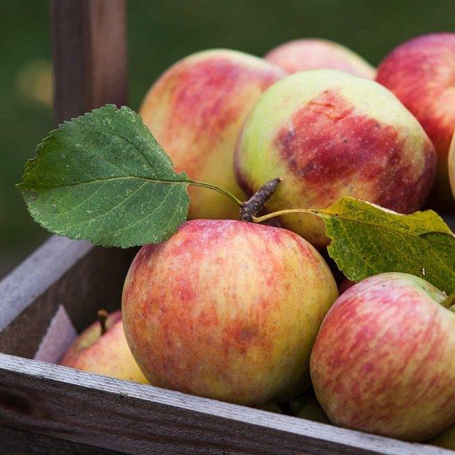 Какие витамины в яблоке, витамины в яблоках, что содержится в яблоках