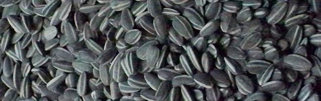 Хранение семян подсолнечника с предварительной очисткой и сушкой