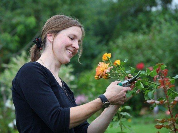 Как правильно ухаживать за розами, чтобы не навредить им