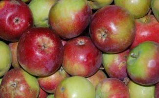 Новые популярные сорта яблонь – достойная замена старым проверенным сортам