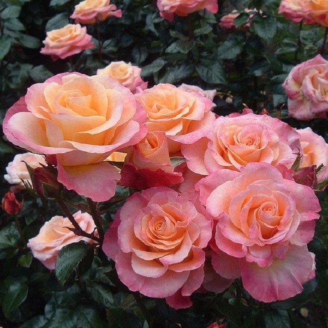 Цветы из фетра своими руками: мастер-класс и выкройки Крестик