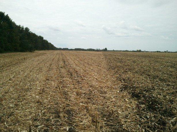 На фото почва для посадки подсолнечника