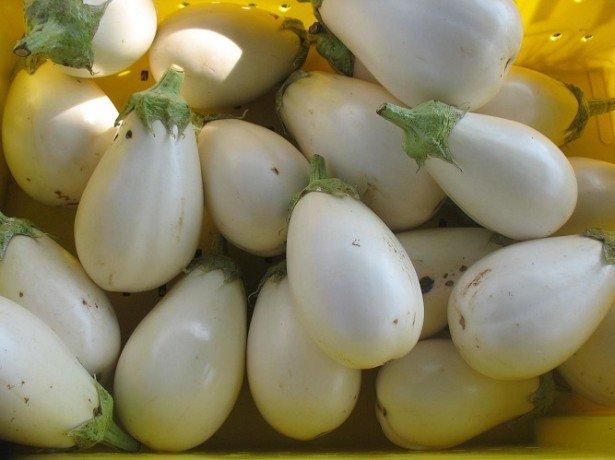 На фото белые баклажаны