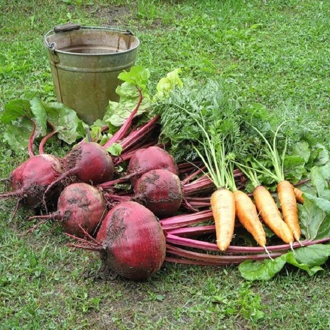 На фото свекла и морковь