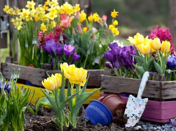 Посадка тюльпанов, как и когда сажать луковицы - Дачные советы 60
