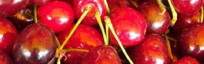 Размножение войлочной вишни косточками, как самый удобный вариант