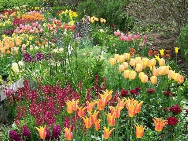 Фотография тюльпанов в дизайне сада в сочетании с другими растениями