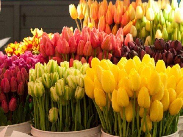 На фото метод влажного хранения тюльпанов