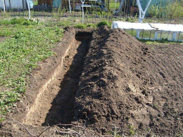 Как посадить виноград в ямы и создать для него наилучшие условия?