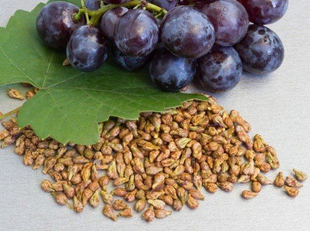 Выбор сорта и подготовка к посадке винограда из семян