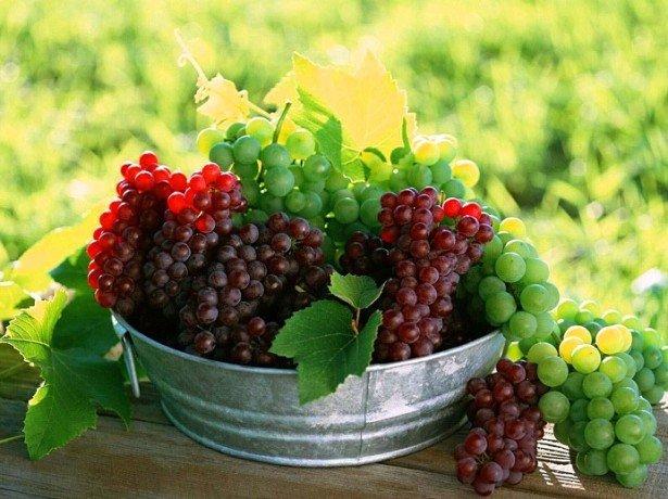 Что нужно учесть перед тем как готовить вино из винограда?