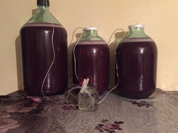 Как изготовит вино из винограда в домашних условиях 775