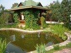 Лантана: как ухаживать за тропической красавицей в домашних условиях