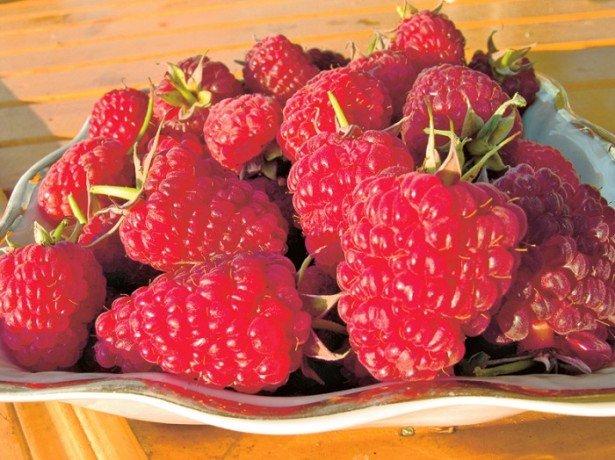 Что представляет собой сорт малины Шапка Мономаха?