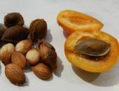 На фото косточки абрикоса и абрикос