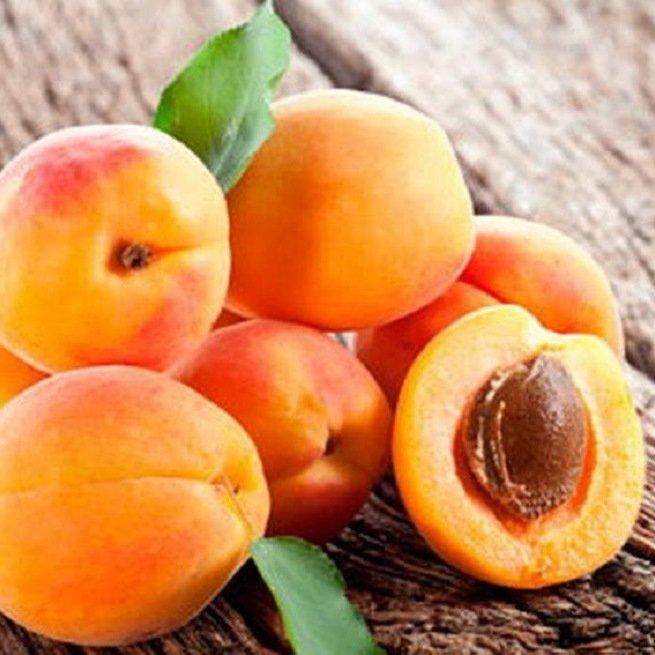 Как сажать абрикос советы по посадке и уходу за ним