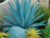 Фото агавы