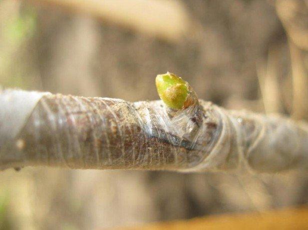 Как формировкой заставить приносить урожай