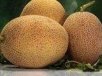 Сорт Слава России: особенности выращивания малинового дерева