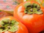 Колумнея: выращиваем «летающую золотую рыбку» в домашних условиях