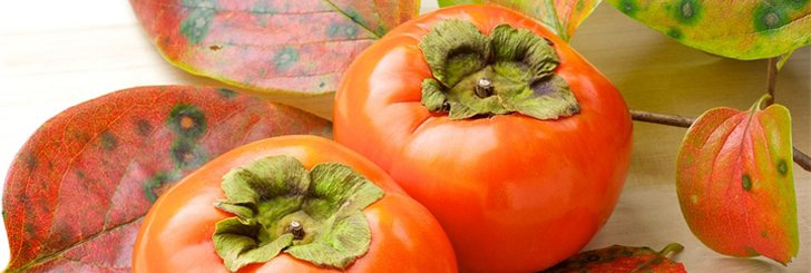 Сорта и виды хурмы