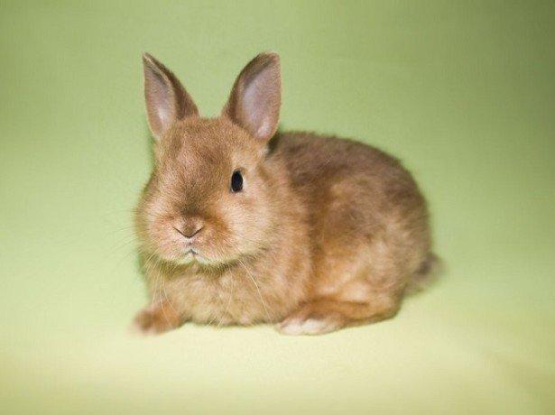 Как определить пол кролика при покупке